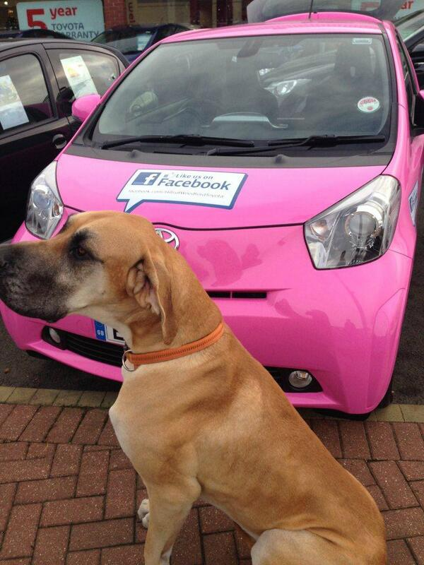Great Dane and Toyota iQ