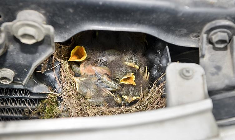 land cruiser robin