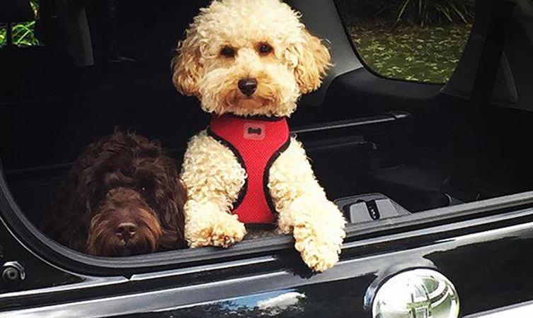 Stuart Broad's dogs