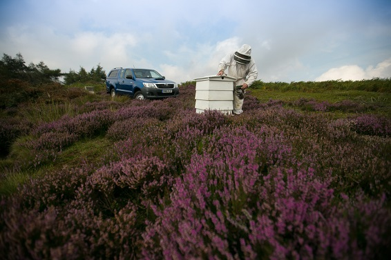 Hilux, Heather and Honey
