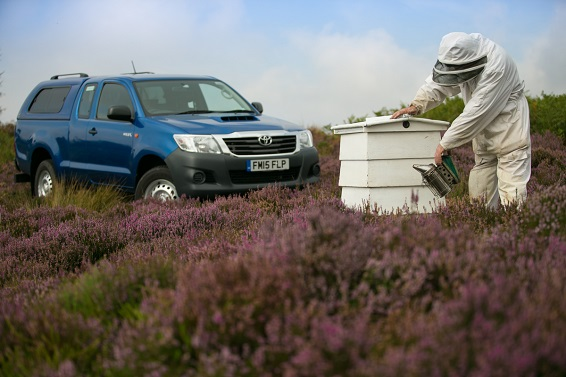 AFSP_HEATHER_HILUX_AND_HONEY_0016