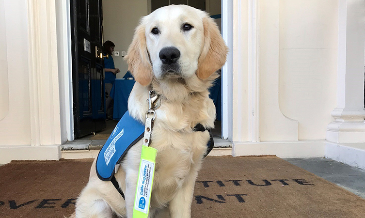 Genchi the guide dog puppy sits waiting outside a front door