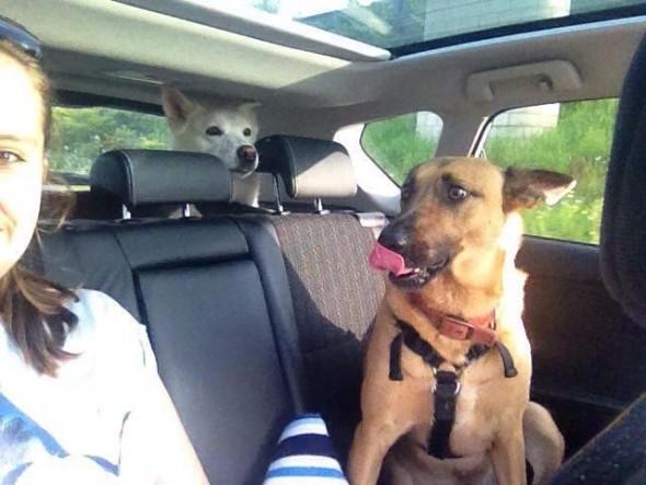 Pickup dogs hybrid